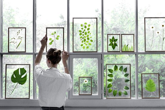 窓際に並べると光が透き通り、フレームと対象物だけが浮いているかのよう