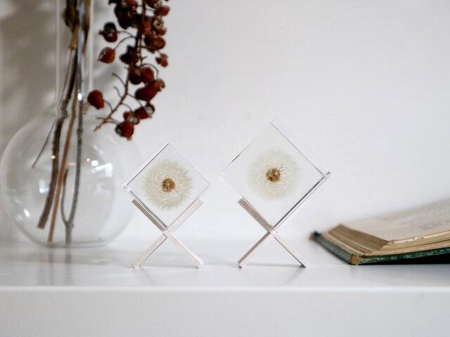 ウサギノネドコ Sola cube タンポポ(4cm角)