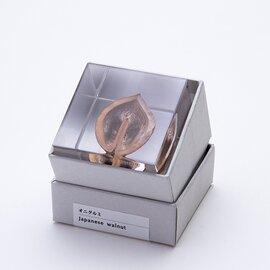 ウサギノネドコ|Sola cube オニグルミ