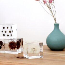 ウサギノネドコ|Sola cube ルリタマアザミ