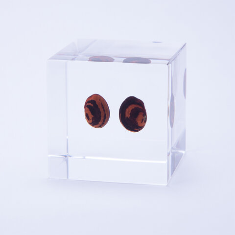 ウサギノネドコ|Sola cube カイマメ