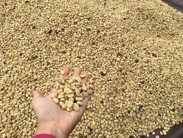 海ノ向こうコーヒー|バリの湧水コーヒー