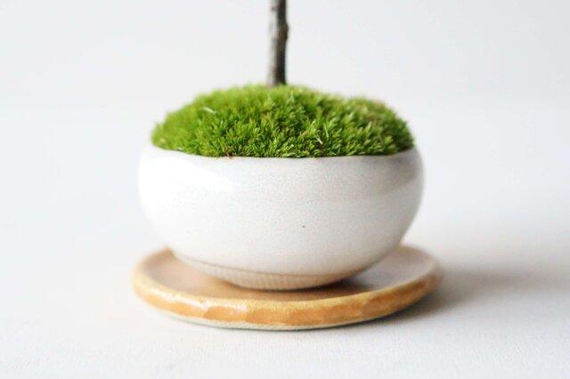 石木花オリジナルの鉢「Palm(パルム)」シリーズ。Palm:Flatは、ぽってりとしたフラットな形状が特徴です。