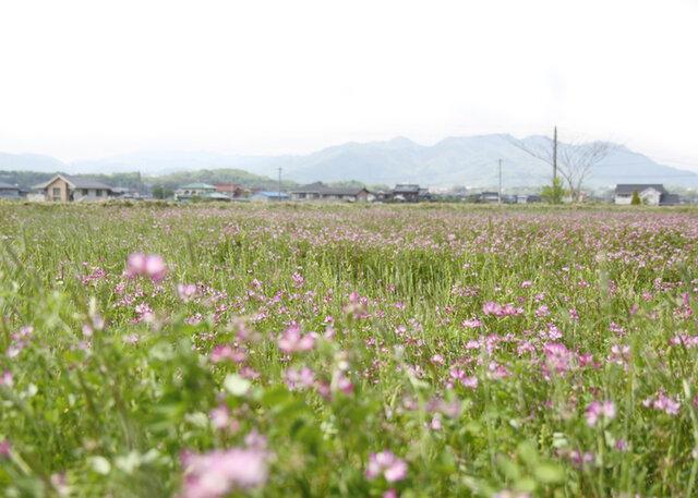坂ノ途中|津山れんげ米