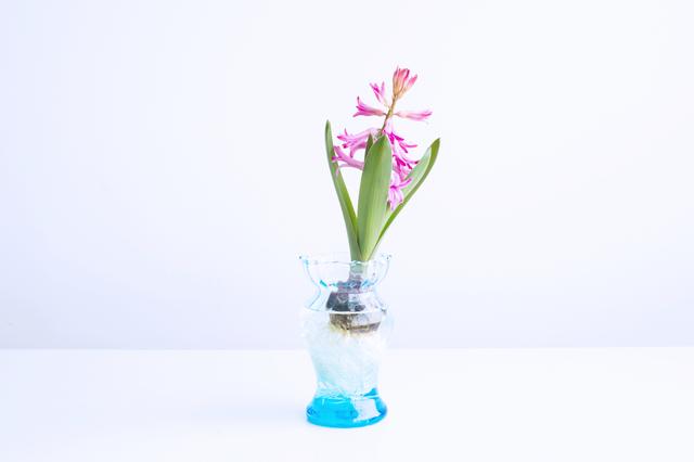 花瓶の底から少しずつ明るくなっていく美しいグラデーション(写真はターコイズ・Sサイズ)。 ブルーのフラワーベースにピンクのお花…など、お互いのカラーを引き立て合う反対色の組み合わせを楽しむのも素敵ですね。