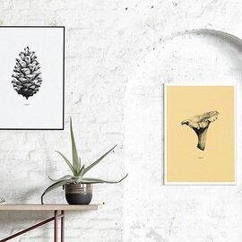 Paper Collective|ポスター Pine Cone