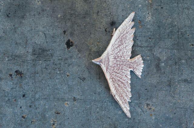 800万年前から600万年前にかけて南アメリカに棲息していた大きな鳥。悠々と飛ぶ様は、美しくもダイナミック。