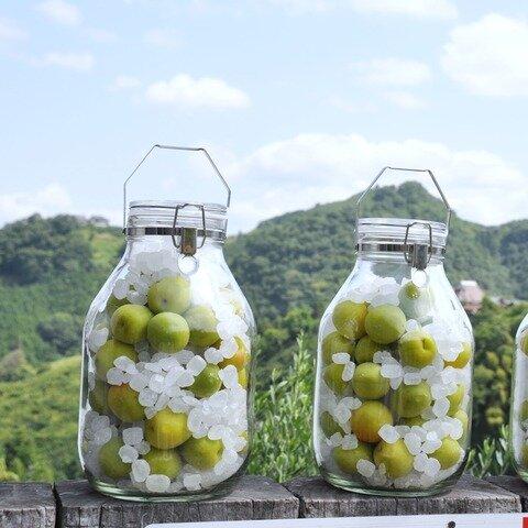 堀内果実園|【予約受注】特別栽培 南高梅 梅酒・梅ジュース用(青梅)サイズ混合