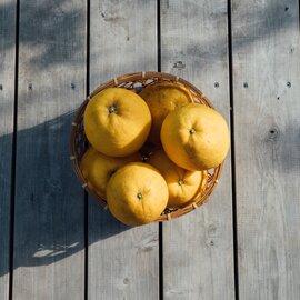 イロドリ |河北さん家の河内晩柑