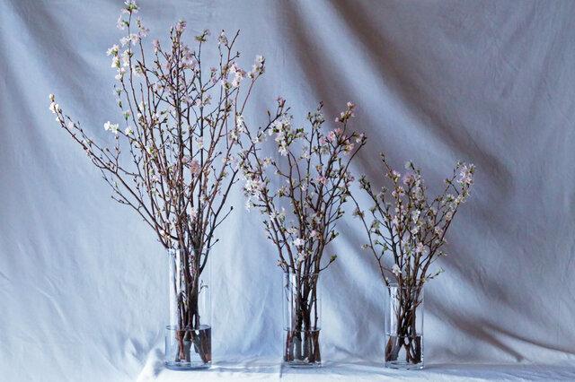 啓翁桜は3サイズ展開。 S・M・L をご用意いたしました。