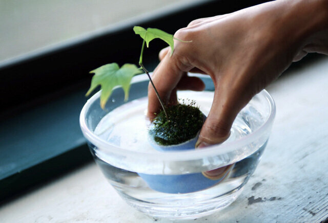 (肥料と活性剤は、植物を丈夫で元気にします)