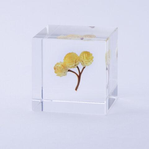 ウサギノネドコ Sola cube イモーテル