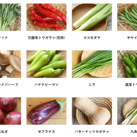 坂ノ途中|旬のお野菜セット(S・M・L)