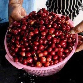タビノネ|インドネシアバリ パックスラマット